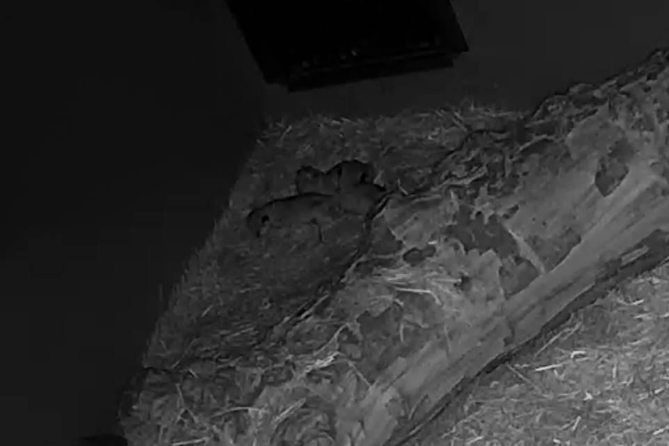 Beelden camera leeuwenverblijf - ZOO Antwerpen