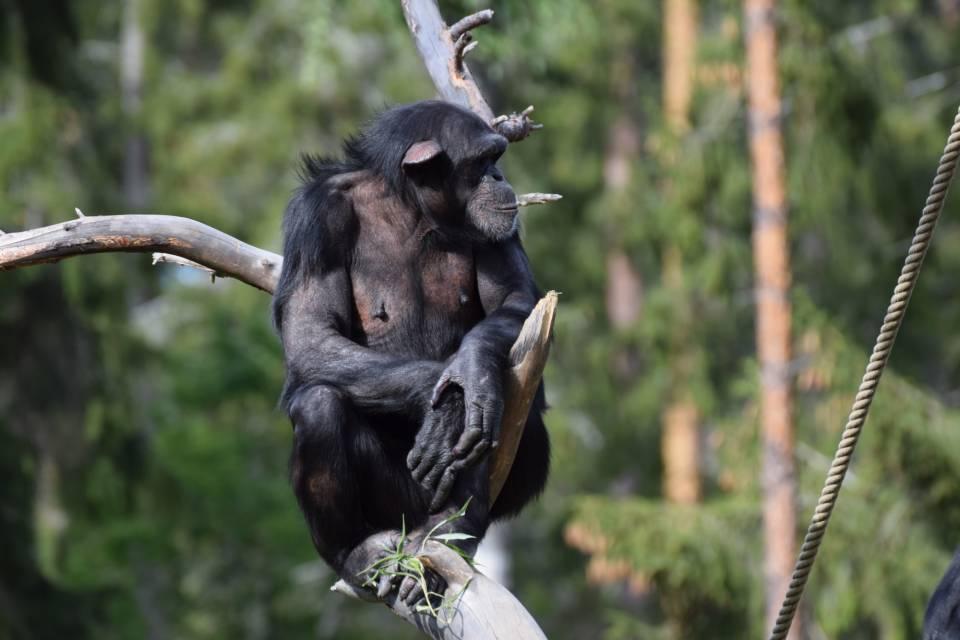 Copyright Kolmarden Zoo