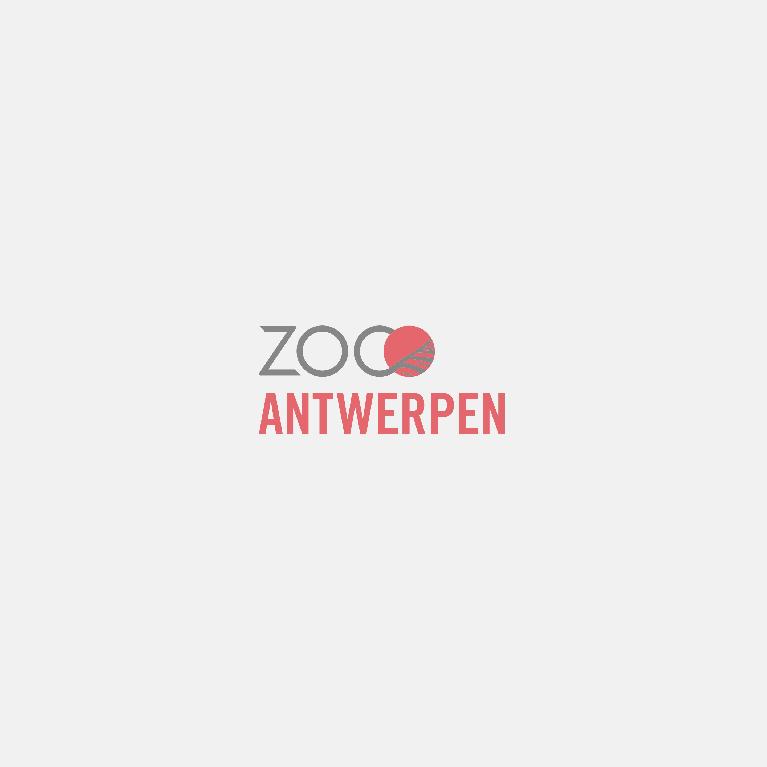 Parkplattegrond Zoo Antwerpen (2017)