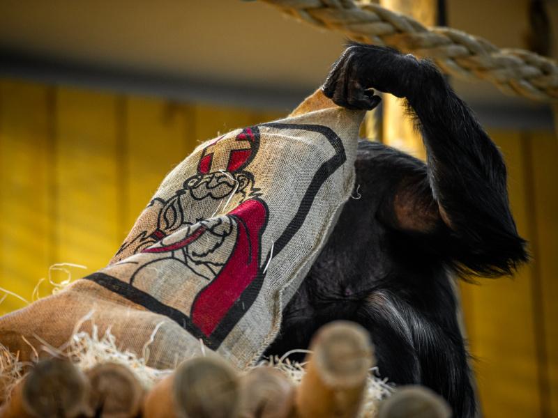 Sinterklaas is een echte dierenvriend