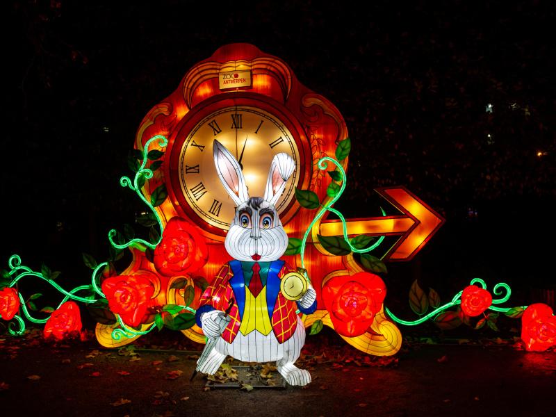 Magisch lichtfestival in ZOO Antwerpen: Alice in Wonderland