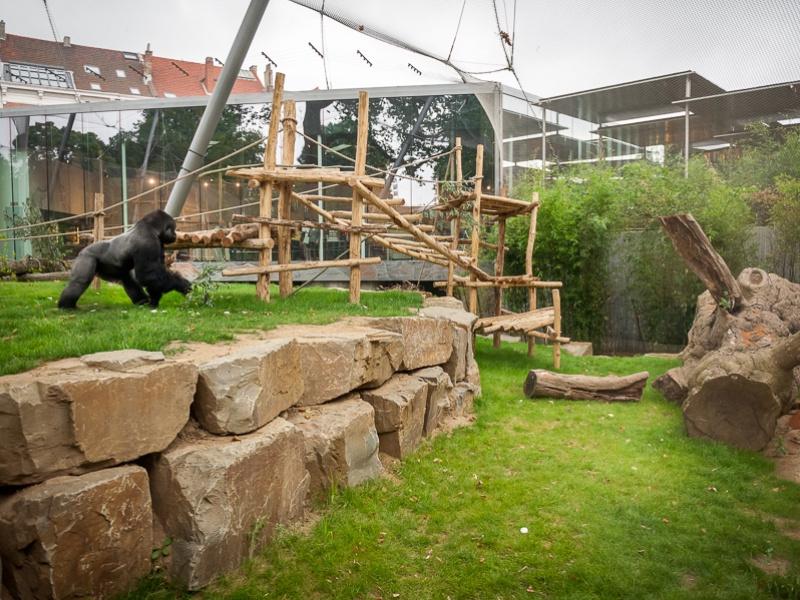 Année record avec la Vallée des grands singes et l'éléphanteau de Noël