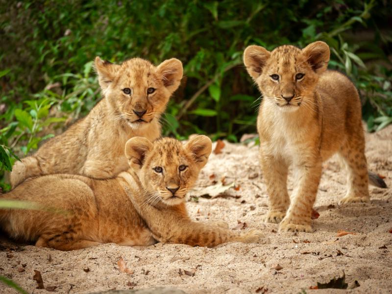 Bungeejumpen bij de leeuwen in ZOO Antwerpen op Werelddierendag